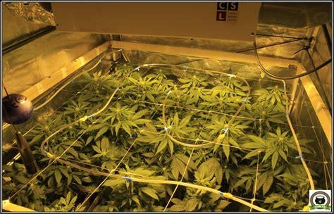 optimizacion    cultivo de marihuana de interior