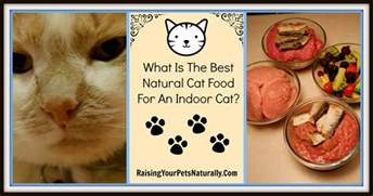 what is the best cat food best cat food brands archives raising your pets