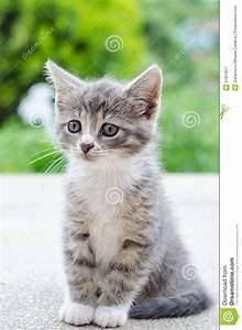 Best 25+ Grey tabby kittens ideas on Pinterest | Cute ...