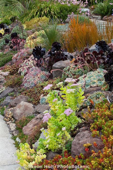 succulent front yard sloped front yard garden by sidewalk with drought tolerant succulent tapestry lawn substitute