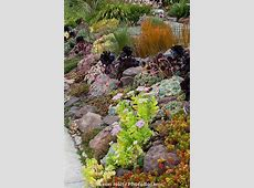 Sloped front yard garden by sidewalk with drought tolerant
