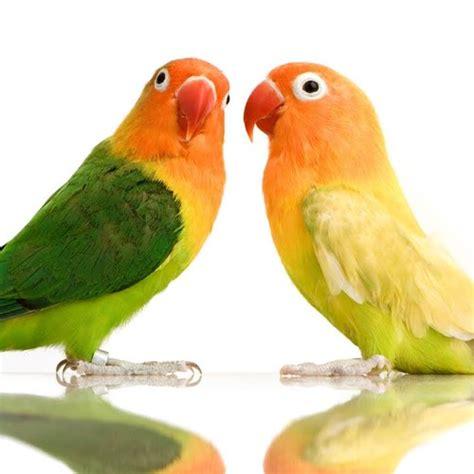 birds care birdscare twitter