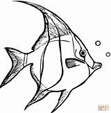 Coloring Angelfish Pages Printable Fish Angel Drawing Tropical Supercoloring sketch template