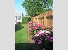 149 best Rose gardens and backyard sanctuaries images on