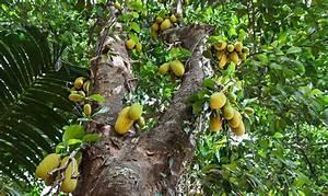 Plants of Mauritius: a Tour of SSR Botanical Garden - MK Blog