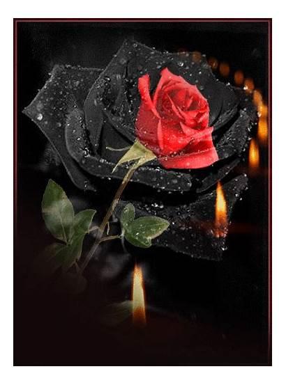 Gifs Flores Rosas Roses Rose Rosa Amor