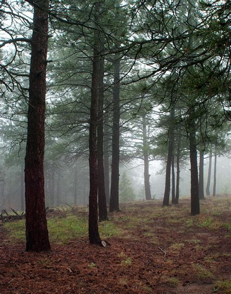 1000 images about forest on pinterest pine forests and