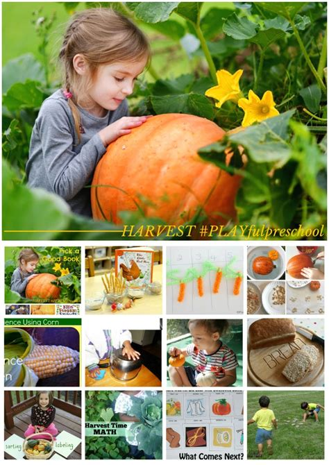 harvest preschool activities a social studies lesson 826 | Harvest2BActivities2Bfor2BPreschool