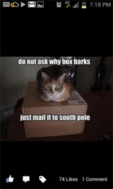 Evil Cat Meme - evil cat memes image memes at relatably com