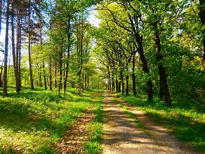 Nature, Spring, Green, Trees, Serbia, Wallpapers, Hd