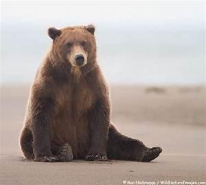 Crazy Alaska Summer! - Photo Blog - Niebrugge Images