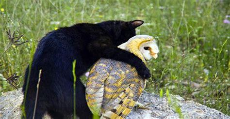 cat  owl  unusual  friends    start