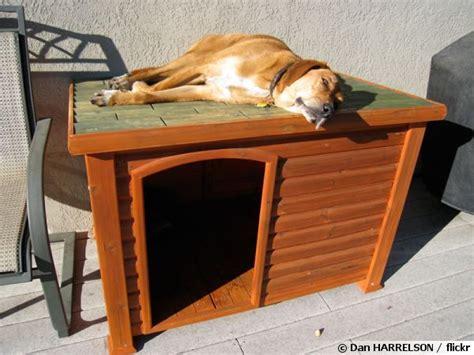 choisir une niche ext 233 rieure pour le chien