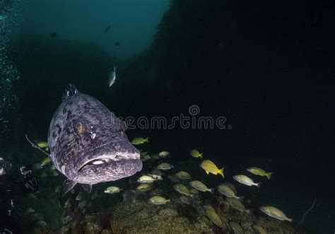 grouper cleaned being eastern feed preview