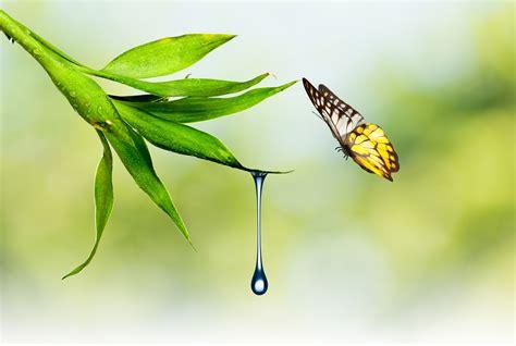 Animated Water Drop Desktop Wallpaper - butterfly nature waterdrop plants wallpapers hd