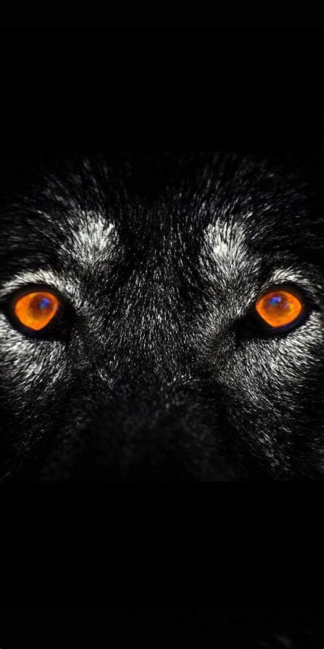 Black Wolves Eyes Wallpapers - Wolf-wallpapers.pro | Wolf eyes, Eye wallpaper, Wolf wallpapers