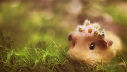 Animal Funny Desktop Hamster Flower Rolling Seek