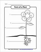 Plant Parts Worksheet Preschool Larger Credit sketch template