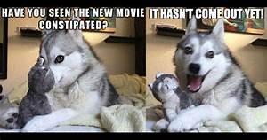 funny husky dog memes - Google Search | ×STUPID PUNS ...