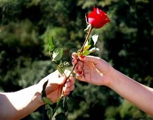 Roses Flower In Hand Love Hd Wallpaper