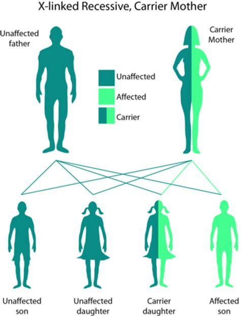 color blindness genetics introduction to genetics ck 12 foundation