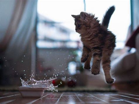 animals cat jumping splashes water wooden surface