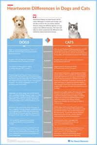 heartworm in cats info graphics heartworm differences in dogs and cats