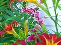 Flowers in Bloom Photograph by Robbin Webb