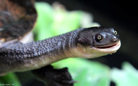 Top 10 Most Amazing Edge Reptiles Edge Of Existence