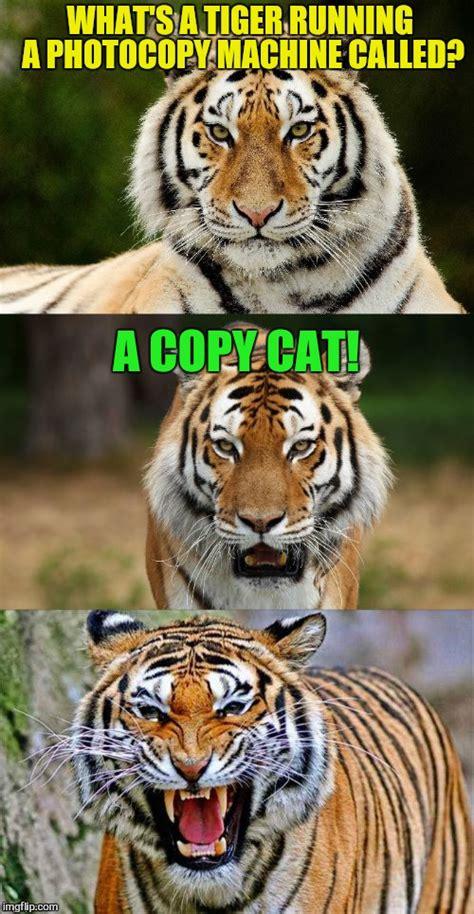 Tiger Meme Tiger Puns Imgflip