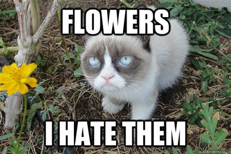 Flower Memes - flowers i hate them grumpy cat flower quickmeme