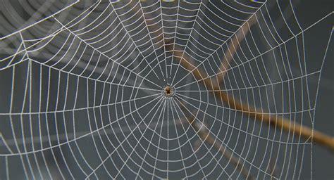 En Australie, Une Gigantesque Toile D'araignée Recouvre