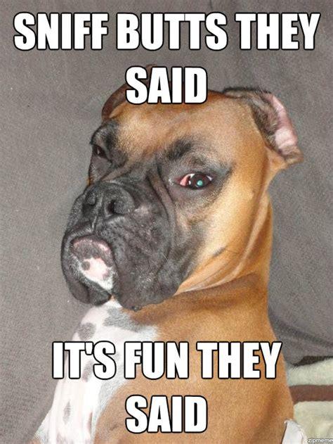 Boxer Meme Boxer Meme Search It S Always A