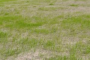 Wann Geht Rasensamen Auf : rollrasen fertigrasen plath gartenbau landschaftsbau ~ Markanthonyermac.com Haus und Dekorationen