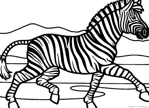 zebra coloring pages  stripes coloring pageszebra