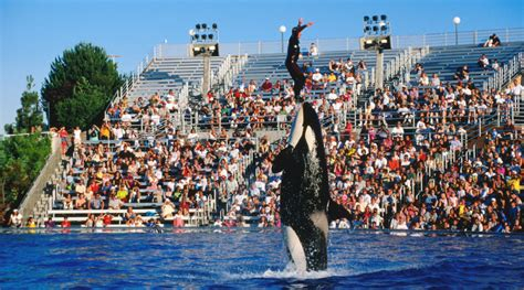 Seaworld San Diego Phase Out Current Orca Show