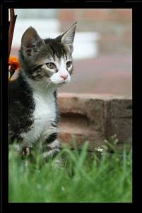 Katze Im Garten Begraben : sabine graffenberg fotos bilder fotografin aus ~ Lizthompson.info Haus und Dekorationen
