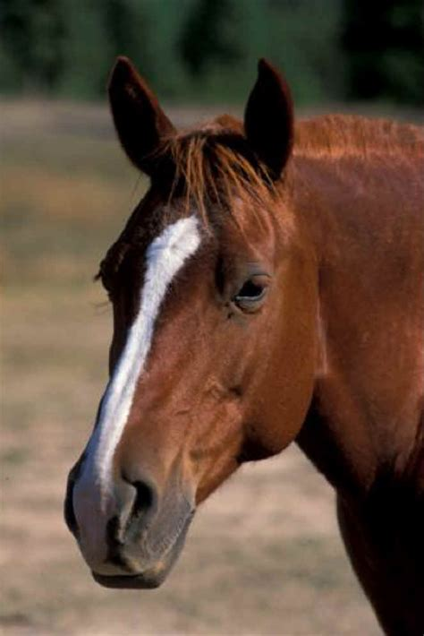 domestic horse wildlife animals wild robertson jim