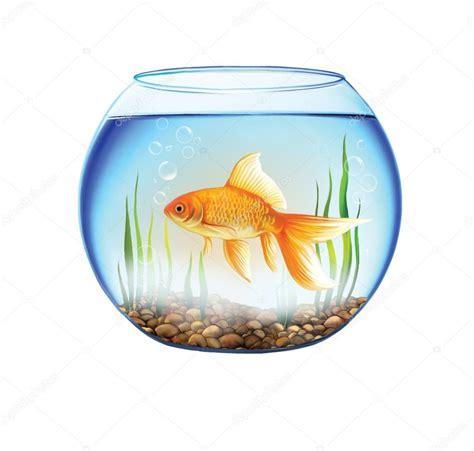 poisson dans un aquarium rond bocal 224 poissons d or