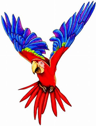 Parrot Clipart Macaw Flying Parrots Transparent Clip