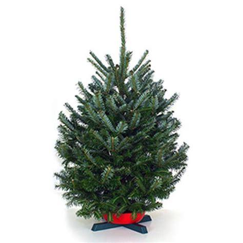 2 ft christmas trees wholesale christmas trees