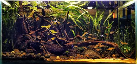 Biotope Aquascape by The Biotope Aquarium And The Biotope Style Aquascaping