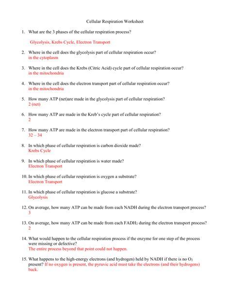 6 respiration worksheet