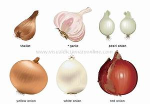FOOD & KITCHEN :: FOOD :: VEGETABLES :: BULB VEGETABLES [2 ...