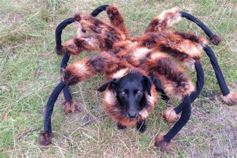 Scary Halloween Props Youtube by Spider Dog Remains The Best Halloween Prank Ever
