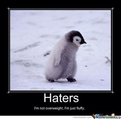 Penguin Memes - penguin haters meme fun pinterest art penguins and meme