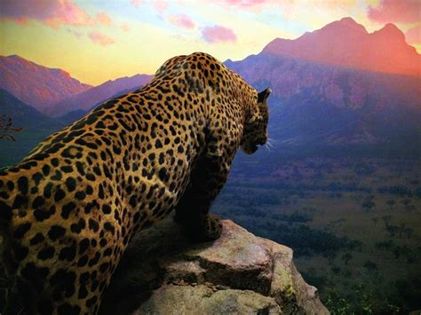Jaguar Backgrounds by Cheetah Standing On Gray Cliff While The Horizon