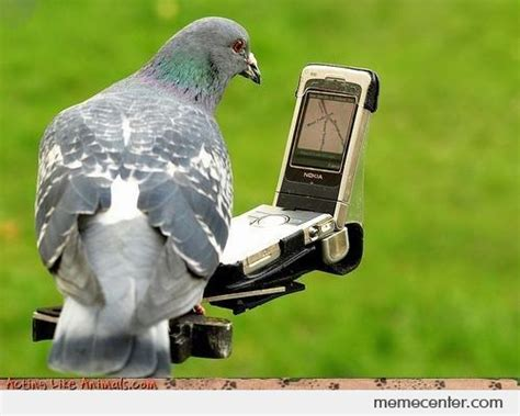 Pigeon Memes - homing pigeon now with gps by ben meme center