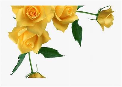 Yellow Border Rose Roses Corner Transparent Clipart