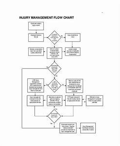 Free 11  Management Flow Chart Examples  U0026 Samples In Pdf